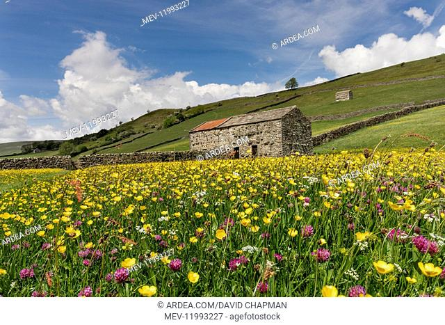 Meadow - Muker - Yorkshire Dales - UK