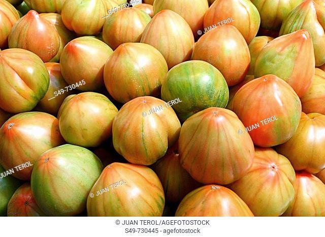 Tomatoes, Valencia. Comunidad Valenciana, Spain