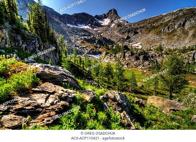 Alpine Meadow, Echo Lake, Kootenay region, BC, Canada