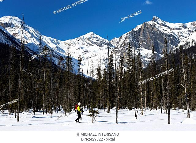 Female snowshoeing with poles, mountain range in the background with blue sky; Field, British Columbia, Canada