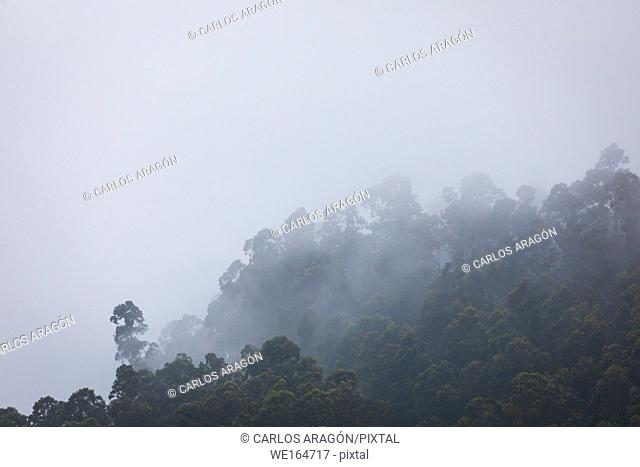 Forested mountain shrouded in mist in a scenic landscape view in Castro Urdiales, Spain