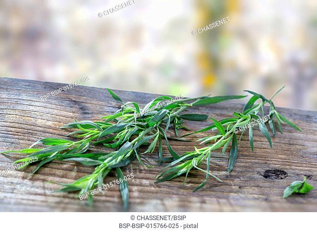 Fresh tarragon twig on a wooden board over a blury wall background