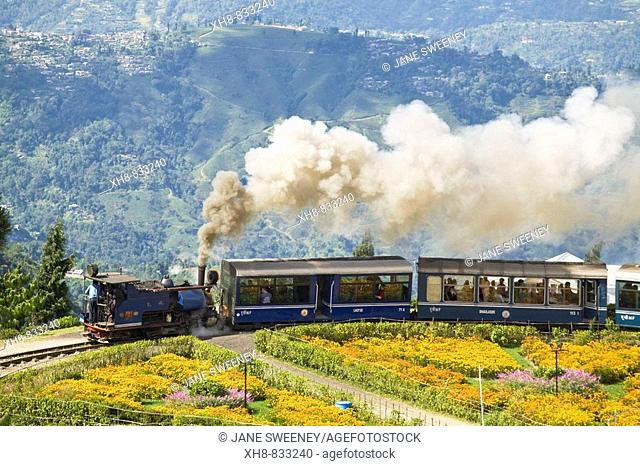 Steam train known as the 'Toy Train' of the Darjeeling Himalayan Railway listed as a World Heritage Site, Batasia Loop, Darjeeling, West Bengal, India