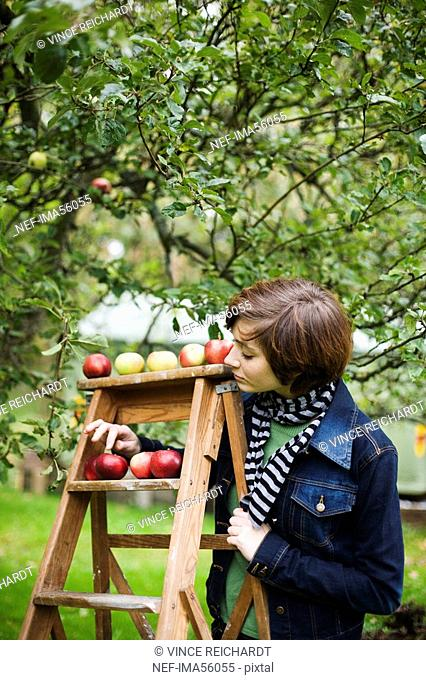 A woman picking apples Sweden