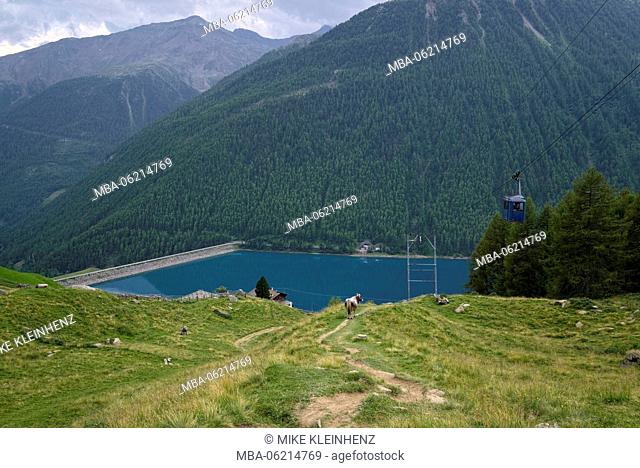 Italy, South Tyrol, Vinschgau, Senales, Vernagt, Reservoir, ropeway, cow