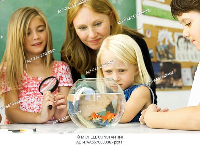 Elementary teacher and students gathered around goldfish bowl