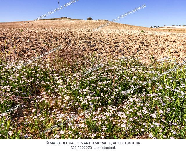 Spring in The Areneros path. Pinto. Madrid. Spain. Europe