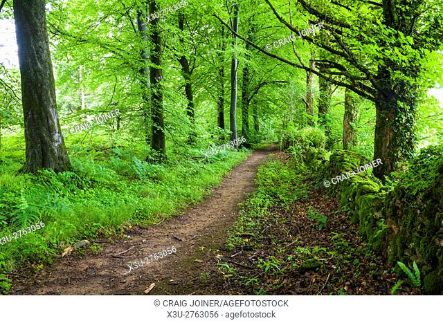A pathway though Stock Hill Forest near Priddy in the, Mendip Hills. Somerset. England