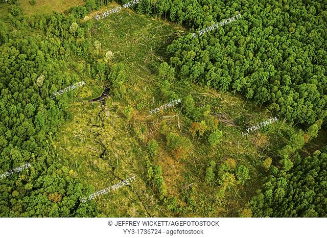 Wildlife habitat improvement, forest opening creation clear cut on the Huron-Manistee National Forest, Michigan, USA