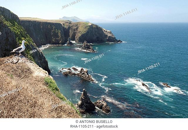 Gull looking over the ocean, Anacapa, Channel Islands National Park, California, United States of America, North America