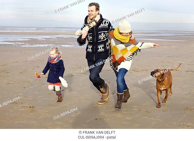 Mid adult parents, daughter and dog running on beach, Bloemendaal aan Zee, Netherlands