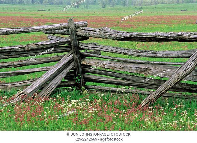 Cedar split-rail fence with prairie smoke flowers, near Sheguiandah, Manitoulin Island, Ontario, Canada