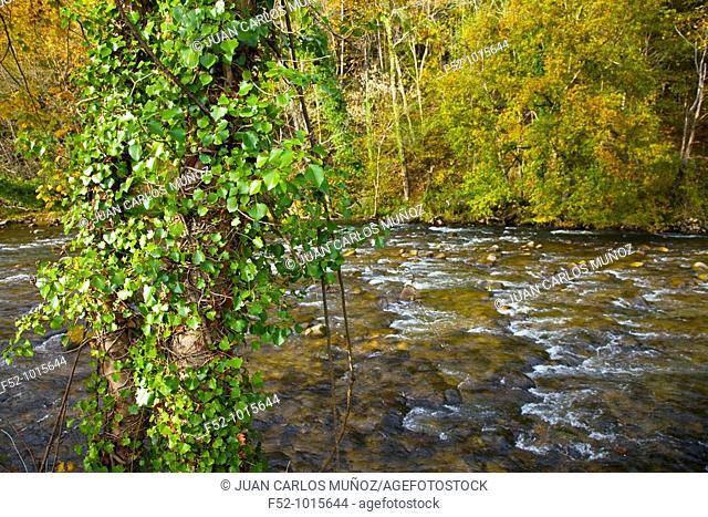 Piloña river. Cuenca del Sella. Around Sevares. Asturias. Spain