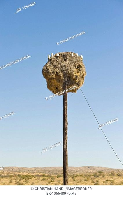 Nest of a Weaver Bird (Ploceidae), on an electricity pole, Namibia, Africa