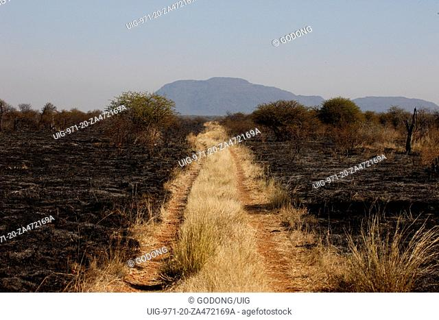 Dirt road in the bush, South Africa