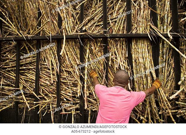 Sugar cane factory. La Romana. Dominican Republic./ Fábrica de azúcar La Romana. Maquinaria para la trituración y preparación de la caña, para extraer el azúcar