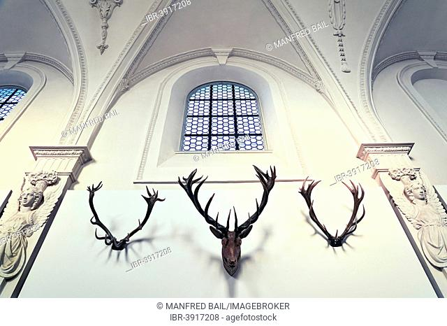 Detail of the antler collection of Count Arco-Zinneberg in the German Hunting and Fishing Museum, Munich, Upper Bavaria, Bavaria, Germany