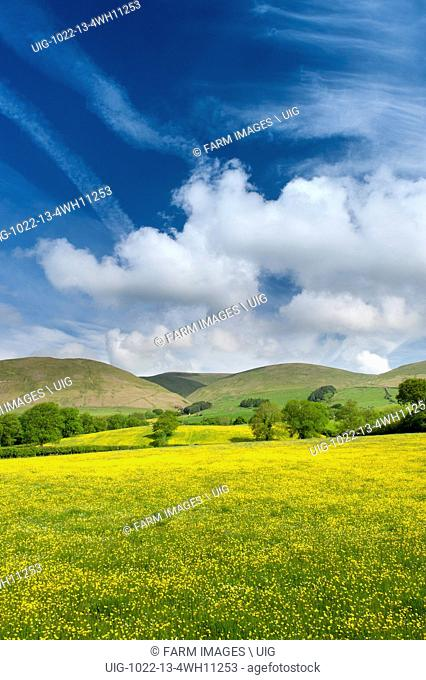 Wildflower meadow in full bloom near Sedbergh, Cumbria, with the Howgill fells under a dramatic summer sky. UK. (Photo by: Wayne Hutchinson/Farm Images/UIG)