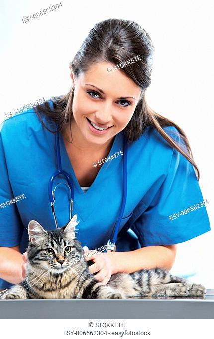 Veterinarian doctor making a checkup of a cute beautiful cat