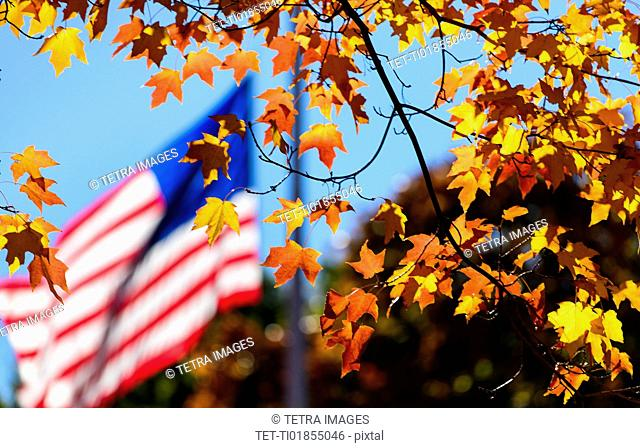 Autumn leaves with American Flag in background