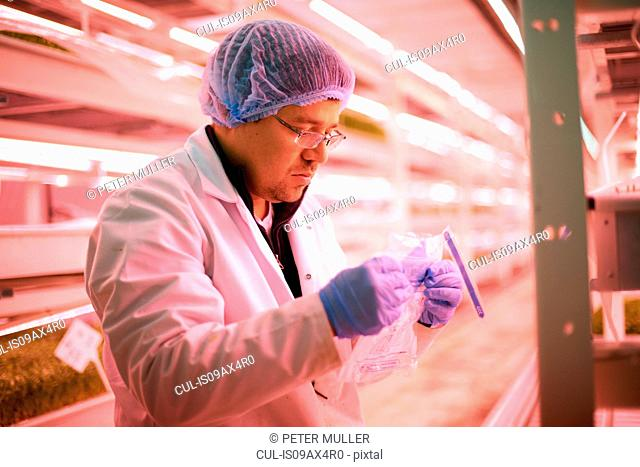Worker wearing hair net and latex gloves collecting samples in plastic bag