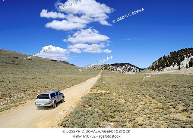Sport SUV on dirt road in the Bristlecone Pine Forest, White Mountains, California, USA
