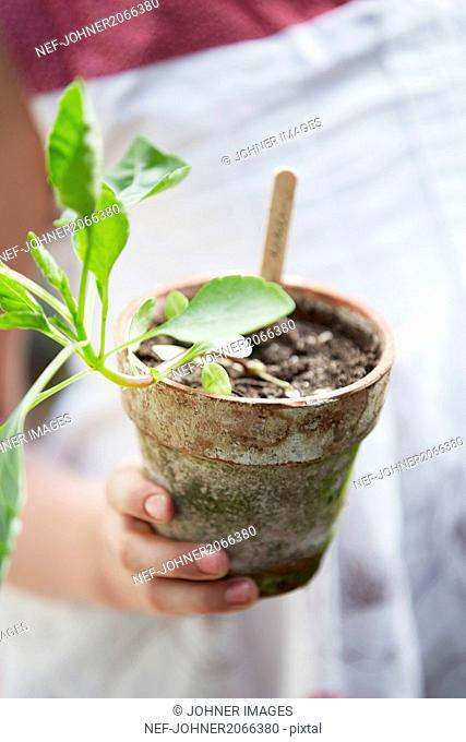 Mid-section of girl holding potted plant