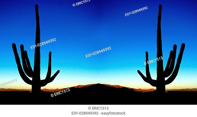 Saguaro cacti silhouetted at sunrise in desert southwest