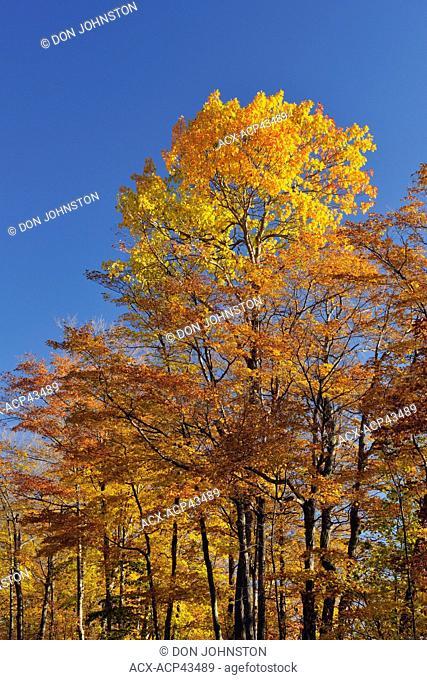 Autumn foliage along Monument Road, Manitoulin Island, Ontario, Canada