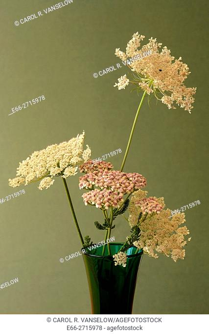 Bouquet of Queen Anne's Lace in green vase