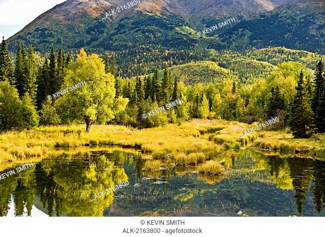 Scenic View Of Birch Trees And Pond During Fall On The Kenai Peninsula In Southcentral Alaska