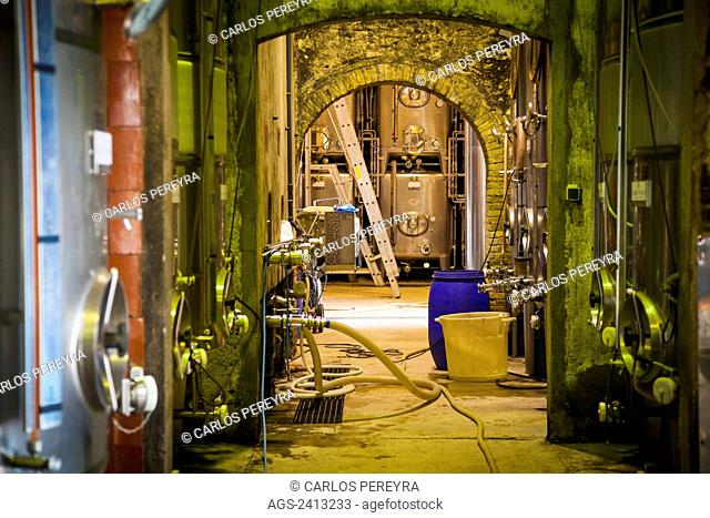 Winemaking in the largest wine region of Catalonia, the Penedes; Barcelona, Spain