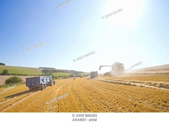 Combine harvester with tractors and trailers, harvesting wheat, in sunny rural field