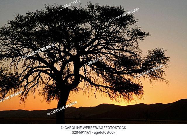 Sunset in Namibian desert