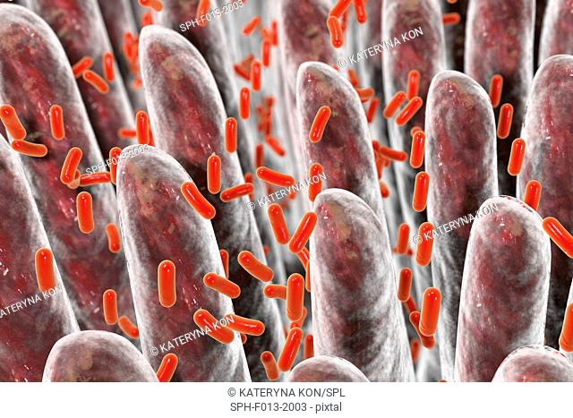 Computer illustration of bacteria present in intestine on the surface of intestinal villi