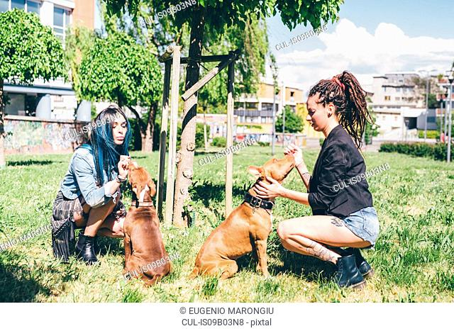 Two young women petting pit bull terriers in urban park