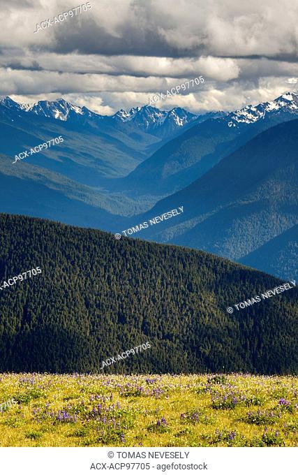 Hurricane Ridge in Olympic National Park, Washington, USA