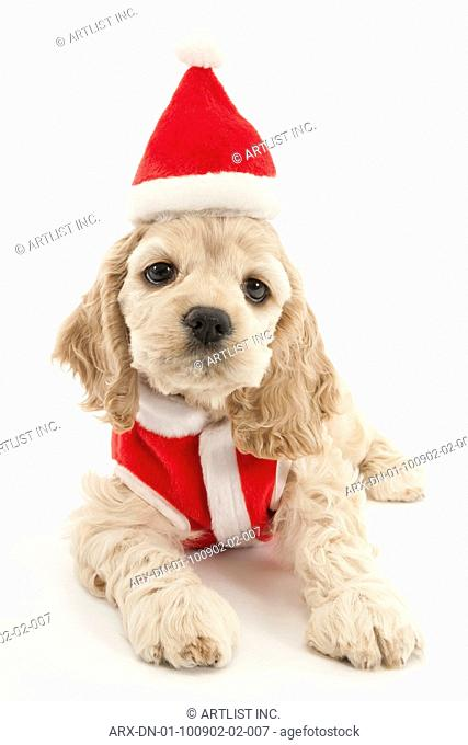 A puppy wearing Santa Claus's costume