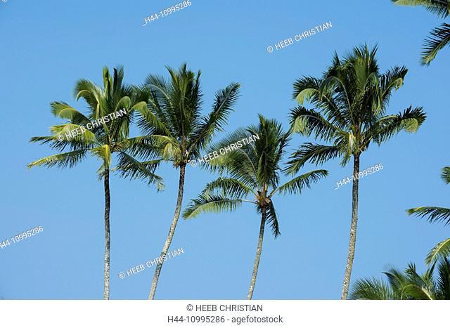 USA, Vereinigte Staaten, Amerika, Hawaii, Big Island, Hilo, palm, palms