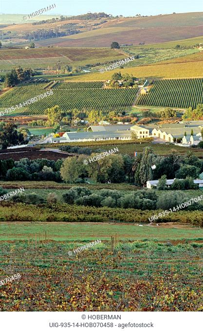 Wine Route, Paarl, Western Cape