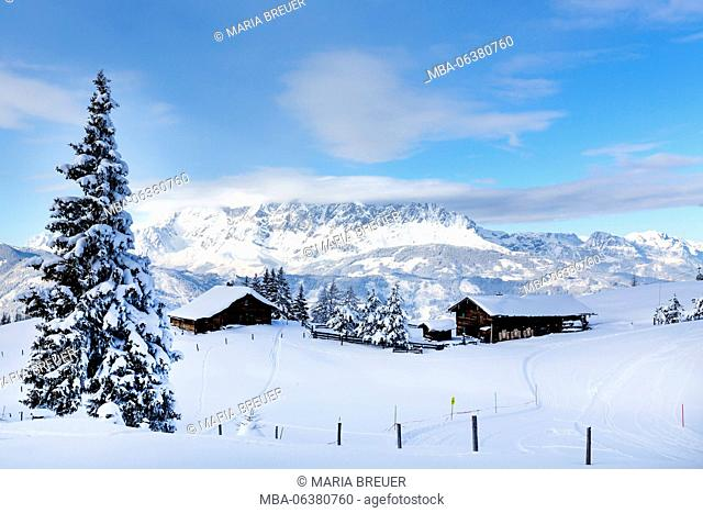Obergaßalm (hut), 1553 m, snow-covered winter scenery, behind it the Hochkönig (mountain), skiing area Alpendorf, St. Johann im Pongau, Ski Amadé in Salzburg