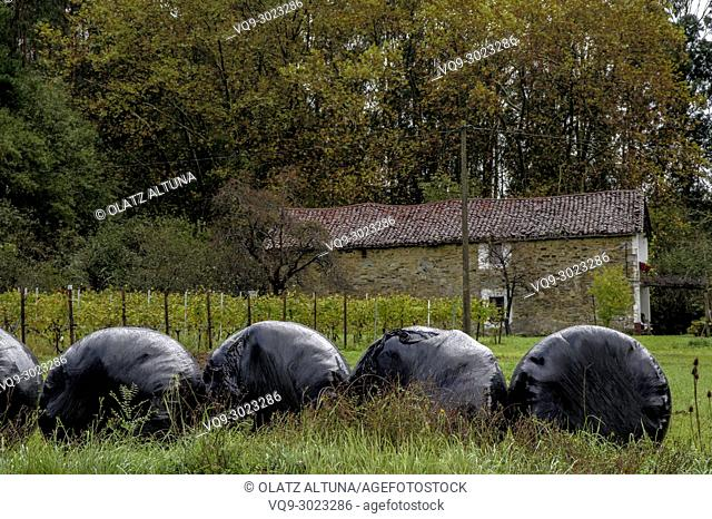 Plastic wrapped round silage bales in a farm with vineyards in Zamudio, Bizkaia, Basque Country, Spain, Europe