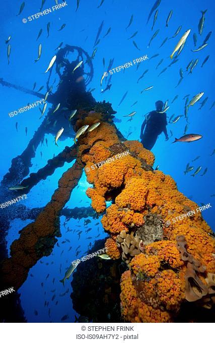 Scuba diving the USCG Duane