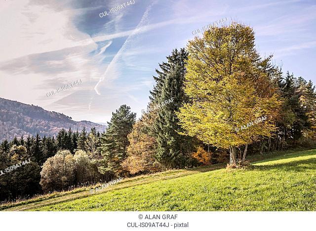 Sunlit autumn landscape