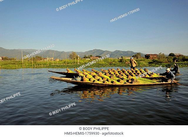 Myanmar (Burma), Shan State, Inle Lake, boatmen, carrying plants