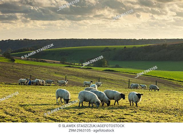 Autumn afternoon in South Downs National Park, West Sussex, England