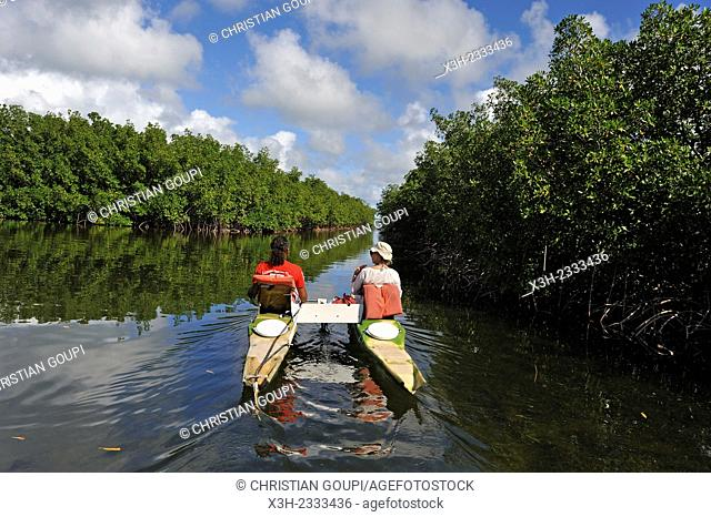 pedalboat trip around the mangrove swamp, Grand Cul-de-sac Marin, Vieux-Bourg, Morne-a-l'eau, Grande-Terre, Guadeloupe, overseas region of France