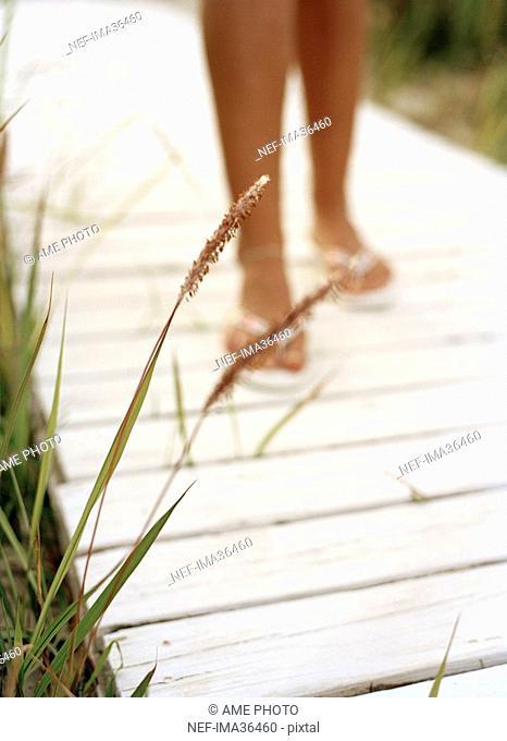 Reed by a boardwalk