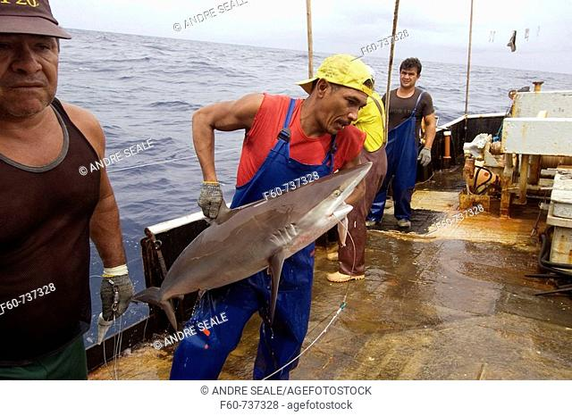 Capture of silky shark, Carcharhinus falcifomes, Offshore commercial longline shark fishing, Brazil, Atlantic Ocean