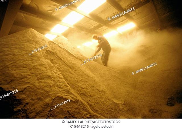 Man shovelling grain